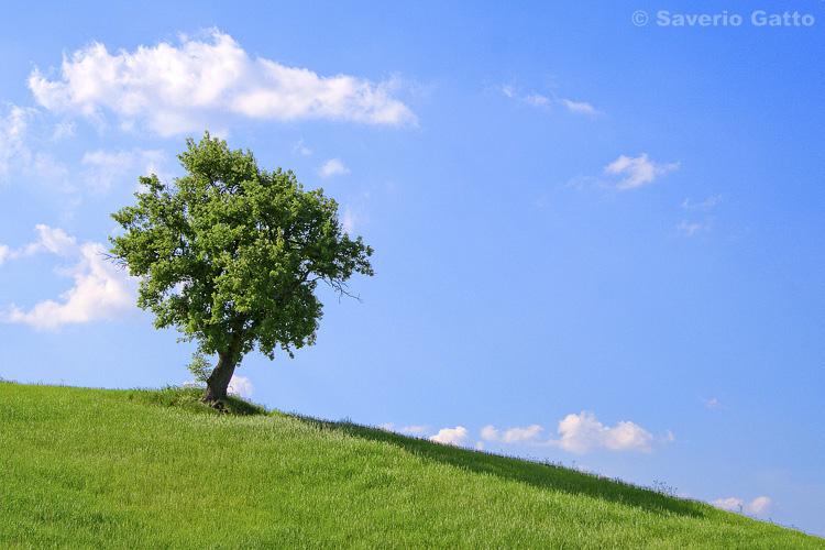 Paesaggio con albero 45 photo by saverio gatto for Disegni paesaggi semplici