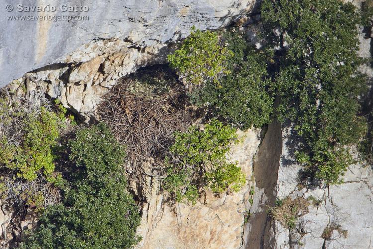Golden Eagle's Nest