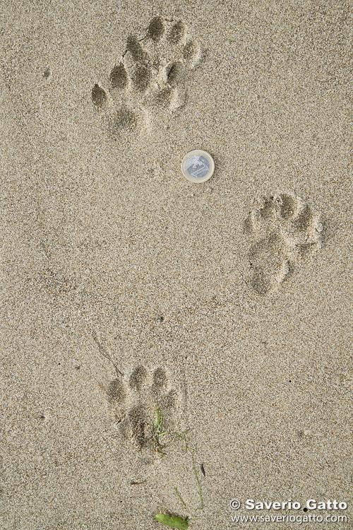 Otter's Trail
