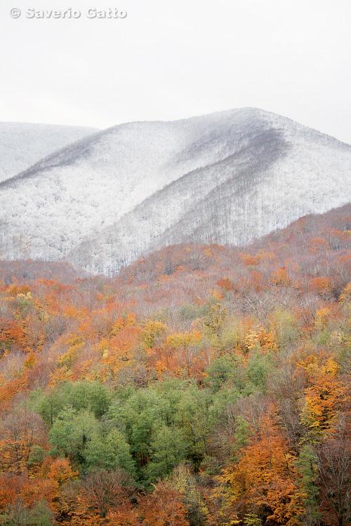 Monte Polveracchio