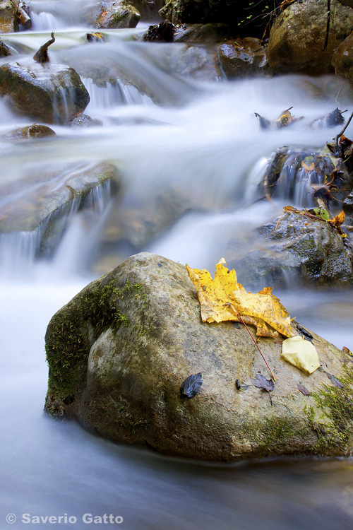 Torrente in autunno