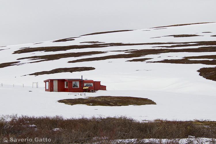 Disgelo sulla tundra norvegese