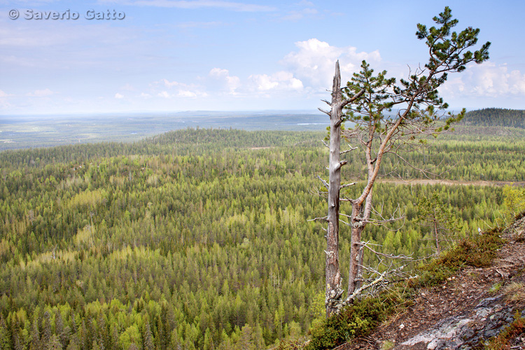 Vista da Valtavaara (Finlandia)