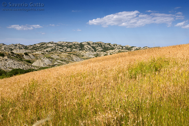 Paesaggio di campagna - Basilicata