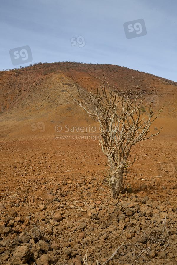 Cape Verde Landscape
