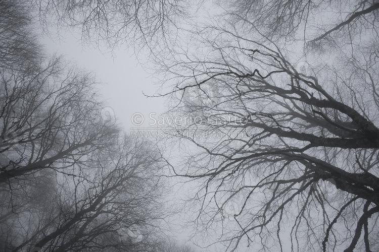 Faggi nella nebbia