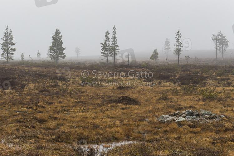 Collina di Kaunispaa, marcita immersa nella nebbia