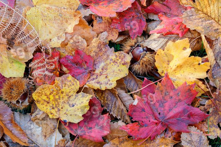 Foglie autunnali, foglie autunnali sul terreno