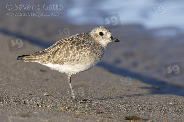 Pivieressa, giovane su una spiaggia