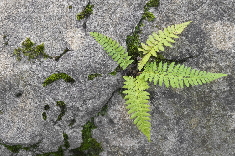 Fern on a rock, close-up of a plant growing from a rock